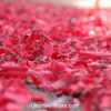紅色に染まる日まで、あと。。。