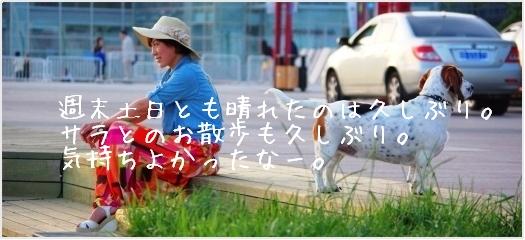 週末久しぶり晴れた青島。サラと一緒にお散歩。