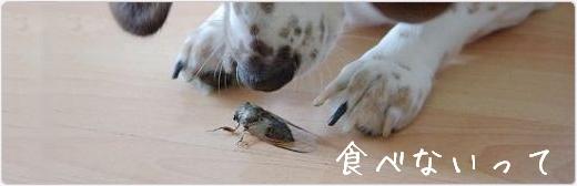 中国人は虫を食べるって言ったのだ~れ?