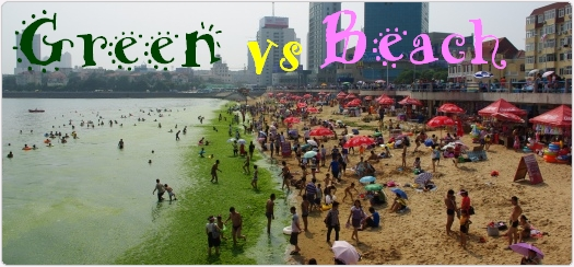 中国青島の海にまた藻がやってきた。