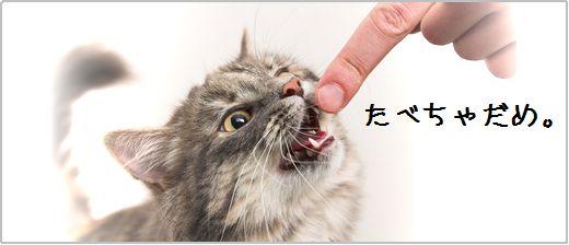 中国では犬、猫も食べることは駄目、、、になるかも。