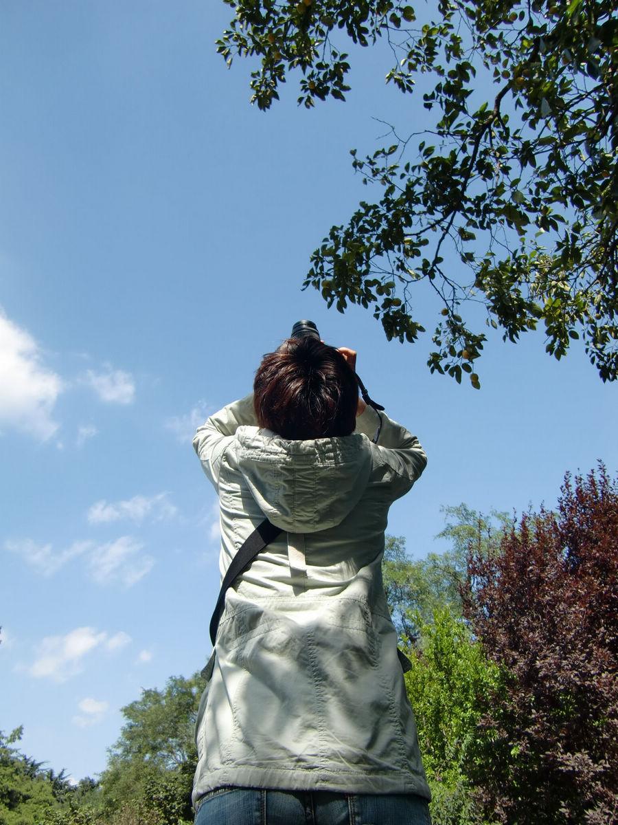 青空と緑の木々。初秋の中山公園にて。