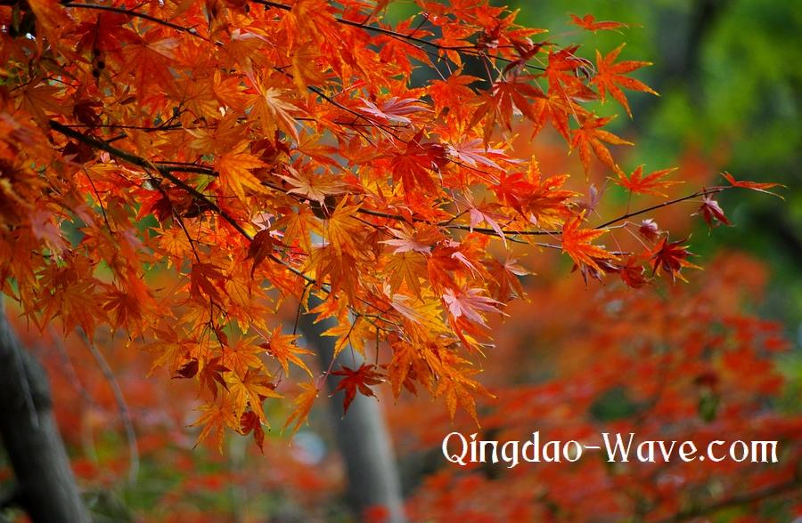 中山公園の紅葉