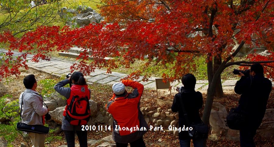 秋の中山公園に写真撮影に行きました。