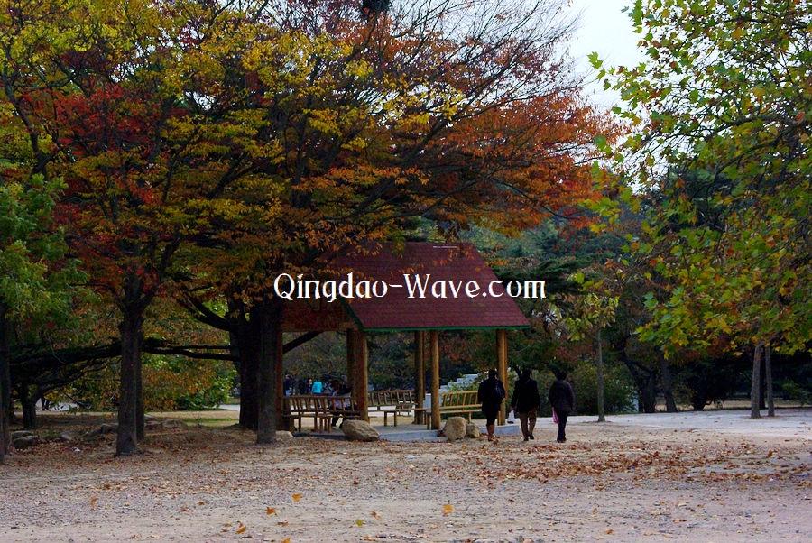秋色の中山公園。