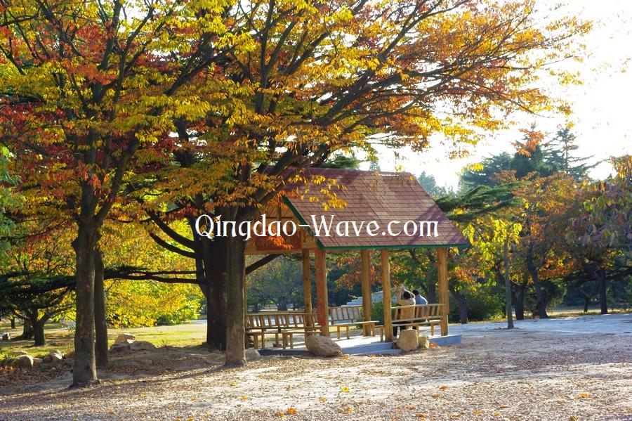 中山公園の明るい秋