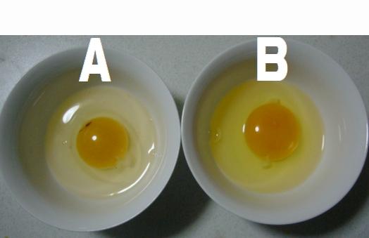 どっちが新鮮な卵でしょう?