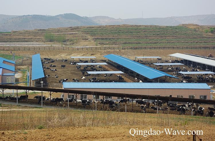朝日緑源の酪農場
