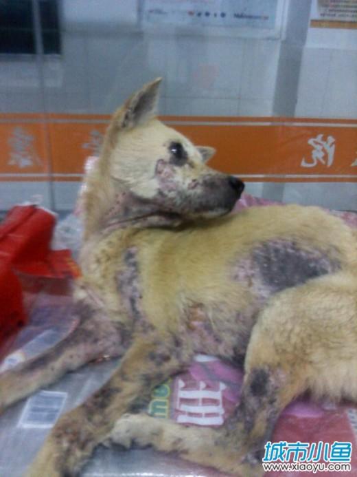 タオバオで救いを待つ犬