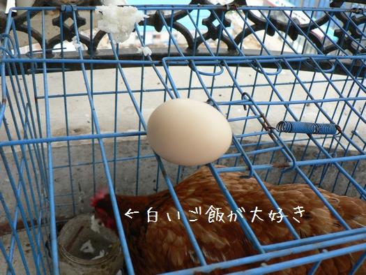 ぴー が産んだ卵