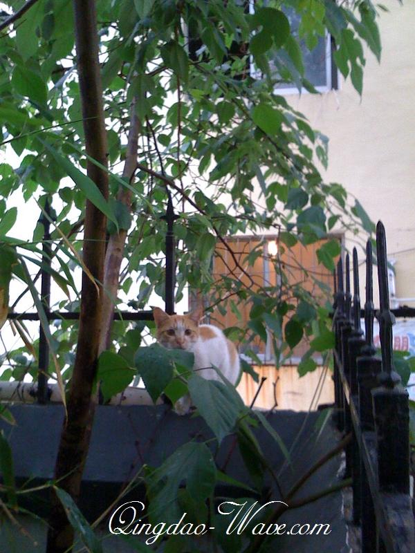 木陰で休憩のネコちゃん