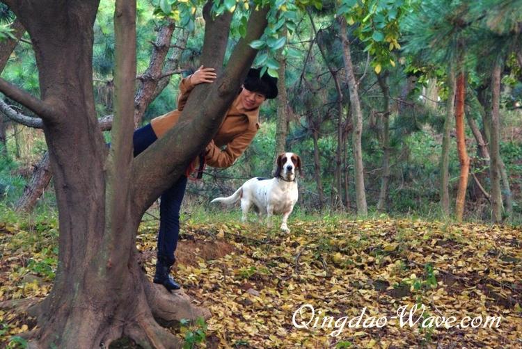 小さな秋の森