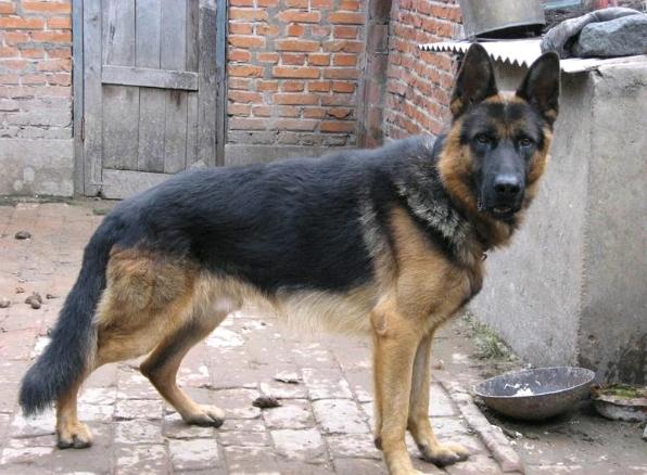 浙江省:犬が人間を食べ殺す